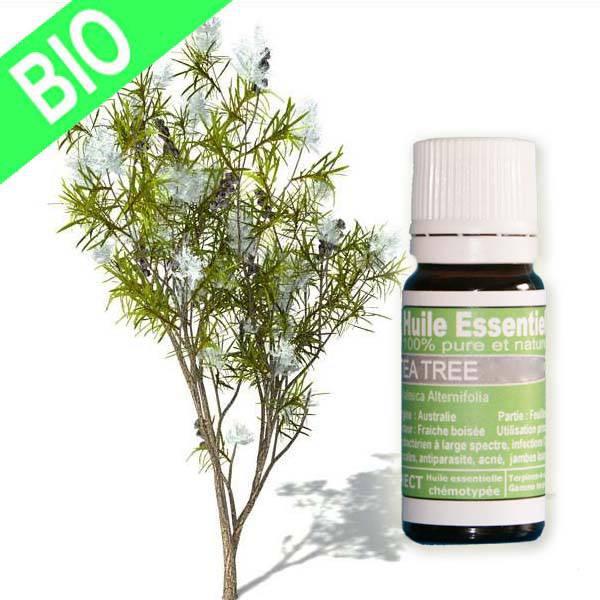 Huile essentielle Tea Tree Bio fort qualité Gold