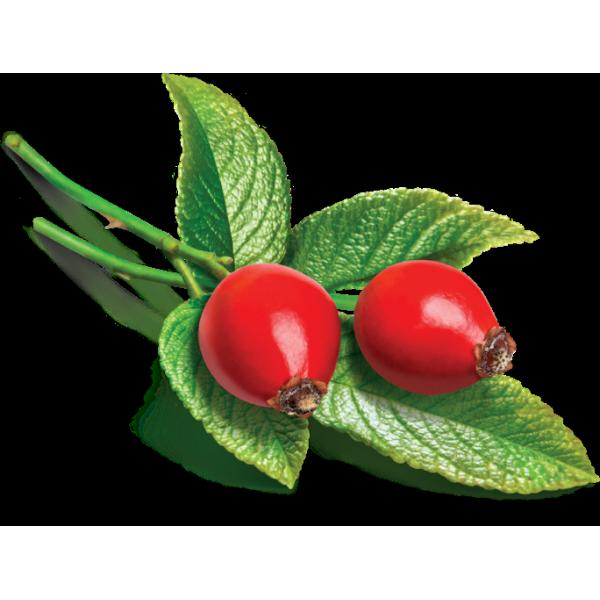 Huile de massage Vierge de Rosier BIO 100 ml végétale (Rose musquée ou églantier)