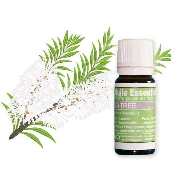Huile essentielle Tea Tree, Eco-Certifiable
