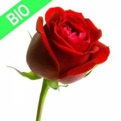 Hydrolat de pure rose BIO 100 ml - Eau de rose