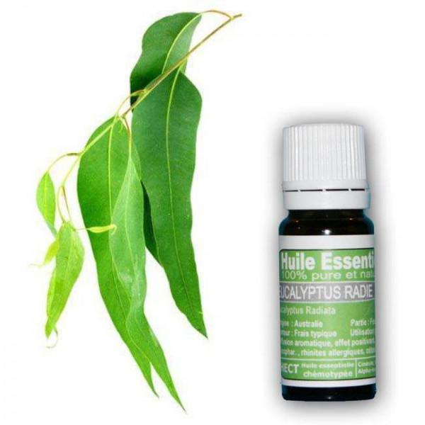 Huile essentielle Eucalyptus Radié Pure et naturelle